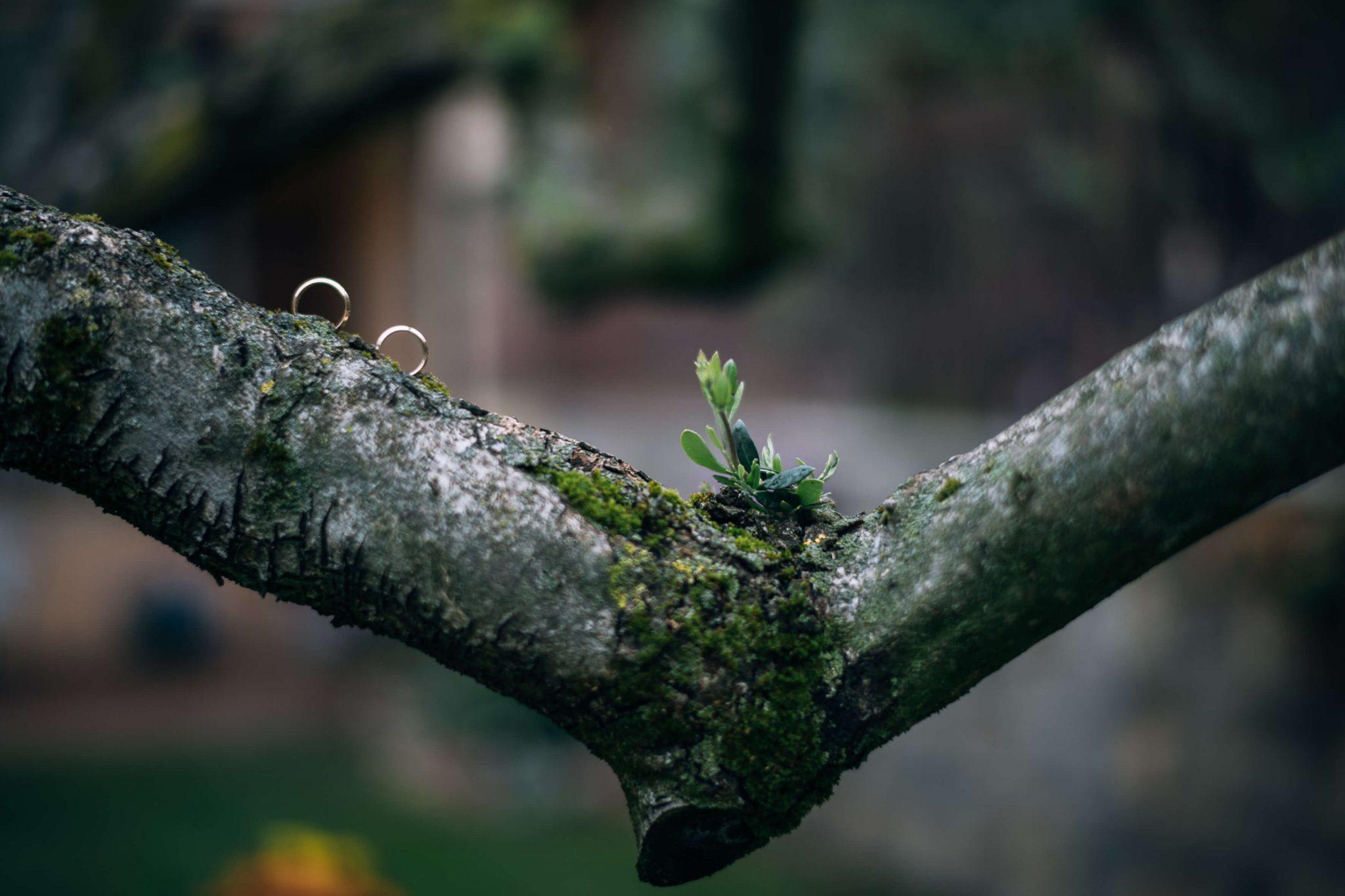 le fedi degli sposi sopra ad un albero